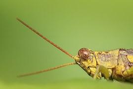grasshopper-1130458__180